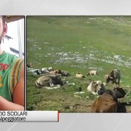 «Quel fulmine ha ucciso 60 pecore del mio gregge»