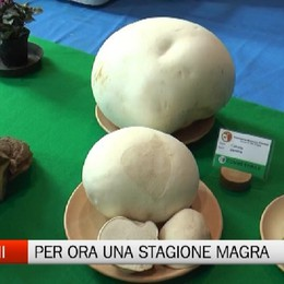 Funghi, a Villa d'Ogna ci si consola con la mostra