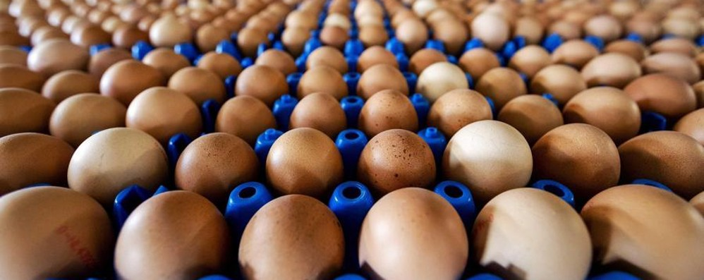 Tracce di Fipronil in 300mila uova Ats: «Valori sotto la soglia di rischio»
