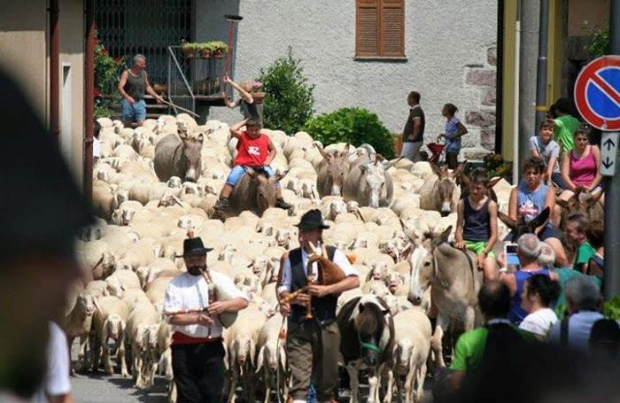 transumanza di pecore