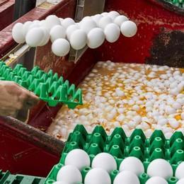 Trovate e ritirate le uova al Fipronil Ma ora scatta l'allarme Amitraz