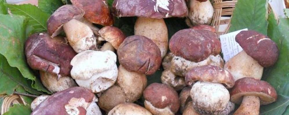 Esce per funghi e si perde Recuperato dall'elisoccorso