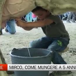 Clusone, la storia di Mirco  Munge mucche a soli 5 anni