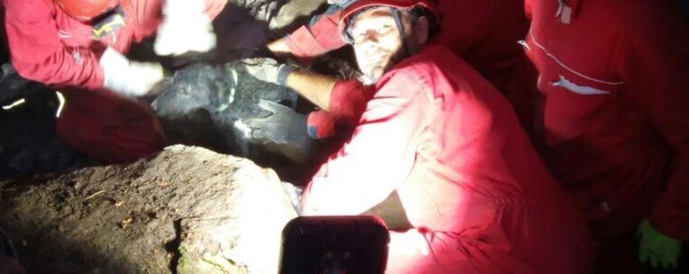 Charlie bloccato nel cunicolo I pompieri salvano il fox terrier