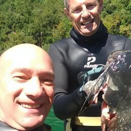 Dal Sebino un pesce siluro da 20 chili Pescato da due sub bergamaschi