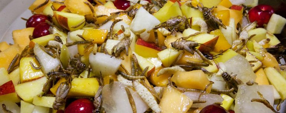 Gli insetti finiscono... nel piatto Ecco la lista autorizzata per il 2018