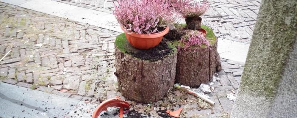 Notte di vasi rotti e piante sradicate È caccia ai vandali dei fiori a Clusone