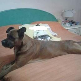 Bambina azzannata dal cane di famiglia É gravissima, l'animale sarà abbattuto