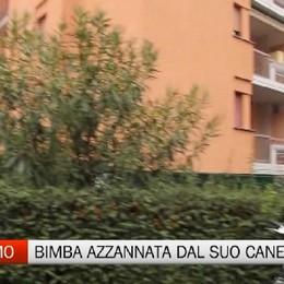 Bergamo, bimba azzannata dal suo cane. Indagato il papà