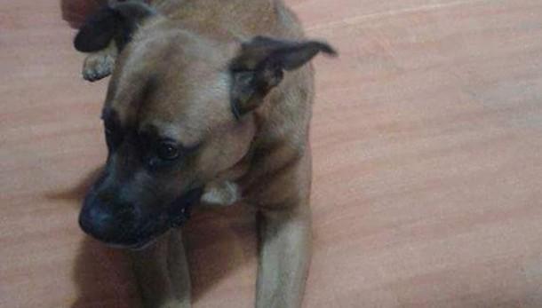 Bimba azzannata dal cane di famiglia «Il patentino diventi un obbligo»