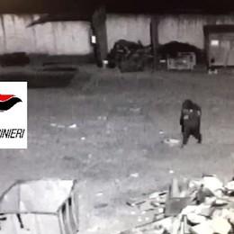 Tenta furto in una ditta di Brembate Aggredisce i carabinieri, arrestato