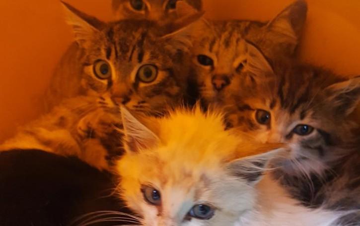 Spirano, morti 5 gatti avvelenati Scatta l'allarme e la denuncia
