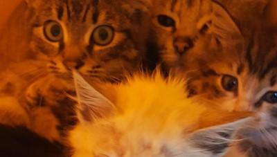 Spirano, morti 5 gatti avvelenati Scattano l'allarme e la denuncia