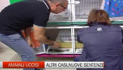 Animali uccisi, nuovi casi e nuove sentenze