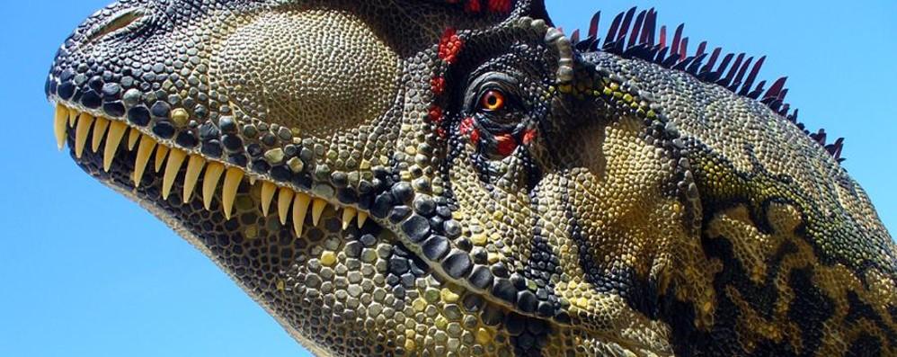 Cento candeline per il museo Caffi A marzo si festeggia con i dinosauri