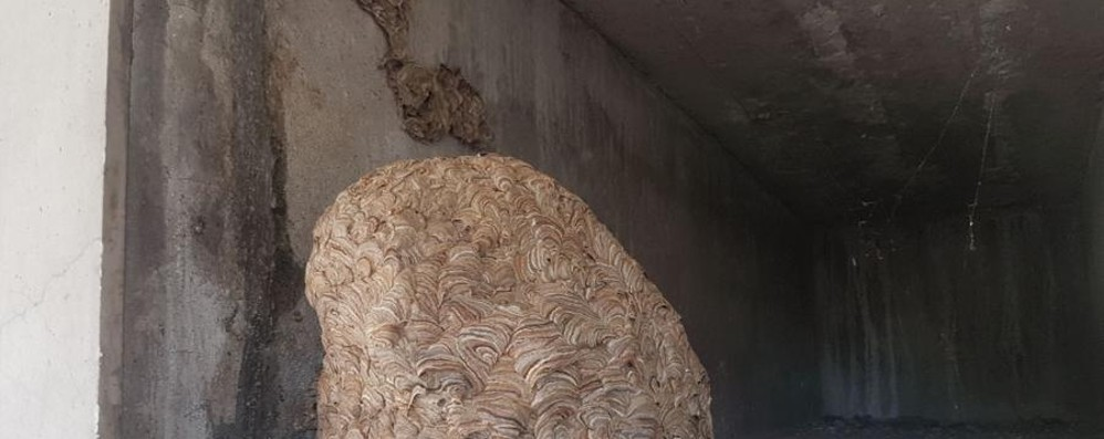Maxi nido di vespe in un loculo A Semonte pompieri al cimitero - Foto