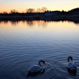 Due cigni al tramonto