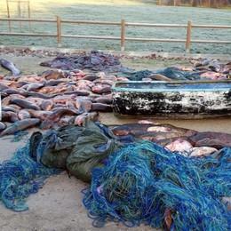Ecco cosa succede ai bracconieri di pesci A Mantova multa da oltre 50 mila euro