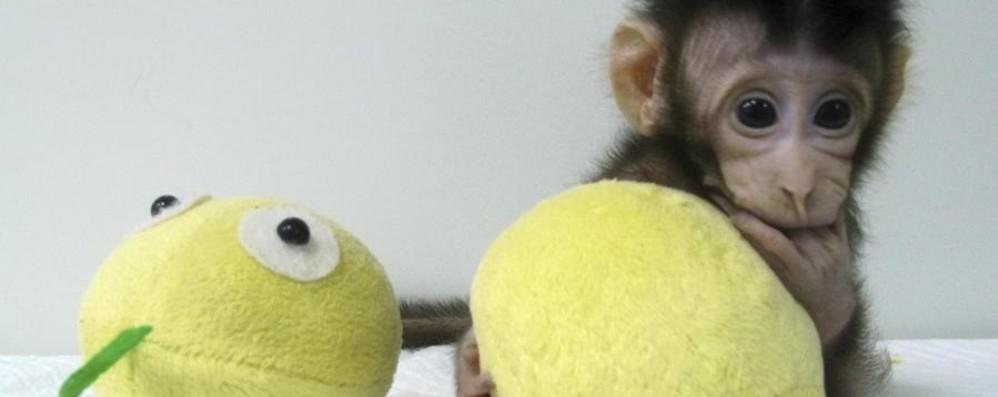 Le scimmie clonate Una deriva scientista