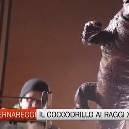 Il coccodrillo e Cavagna, al Bernareggi la Mostruosa meraviglia