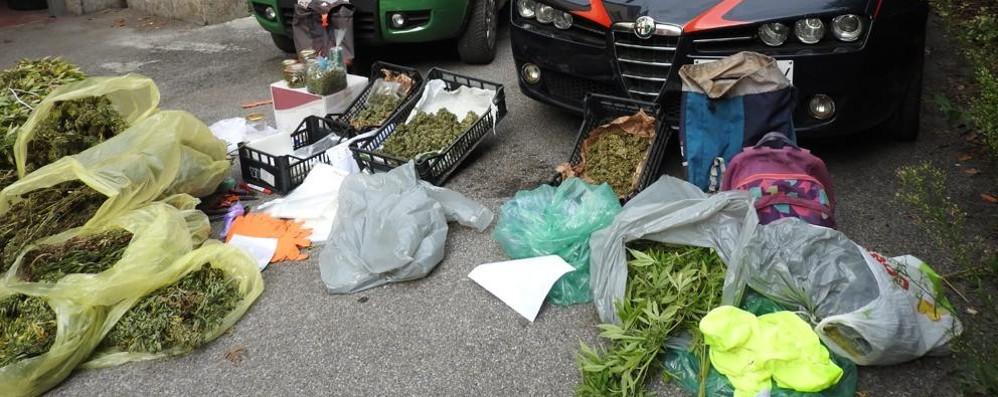 Piantagione di marijuana a Stabello Zogno, nei guai due cugini di 49 e 34 anni