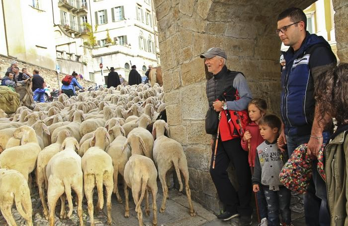 Festival del Pastoralismo gregge di percore per le vie di città alta
