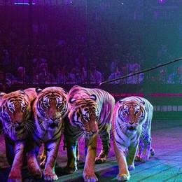 A Bergamo il Circo Americano dei Togni  Dopo 15 anni torna lo spettacolo a tre piste