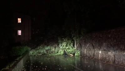 albero caduto in circonvallazione