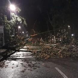 Bergamo, forti raffiche di vento   Alberi ostruiscono le strade- Video