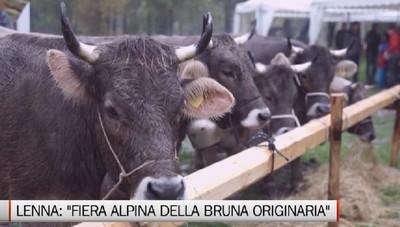 Lenna: la 1.a Fiera Alpina della Bruna Originaria