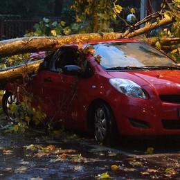 Tromba d'aria e blackout in 100 paesi Treviglio, alberi caduti anche su un'auto