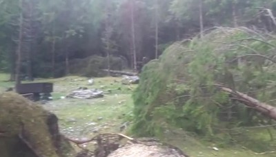 Colere, nel bosco un'ecatombe Caduti decine di alberi - il video