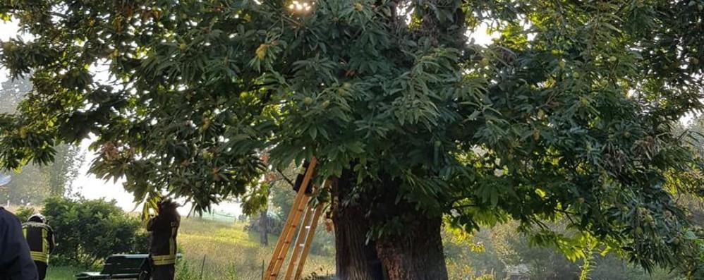 Leffe, dà fuoco a nido di calabroni Ma incendia un albero secolare