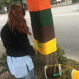 Il viale si colora di meraviglia -Foto Gli studenti «vestono» gli alberi