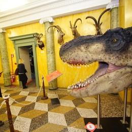 I dinosauri al museo fanno il pieno Mostra al Caffi, proroga al 6 gennaio