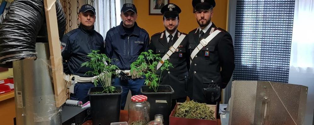 Domiciliari per un 40enne insospettabile Coltivava marijuana in casa a Spirano