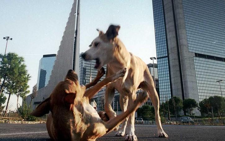 Zuffa tra due cani a Valbrembo Per separarli feriti padrona e passante