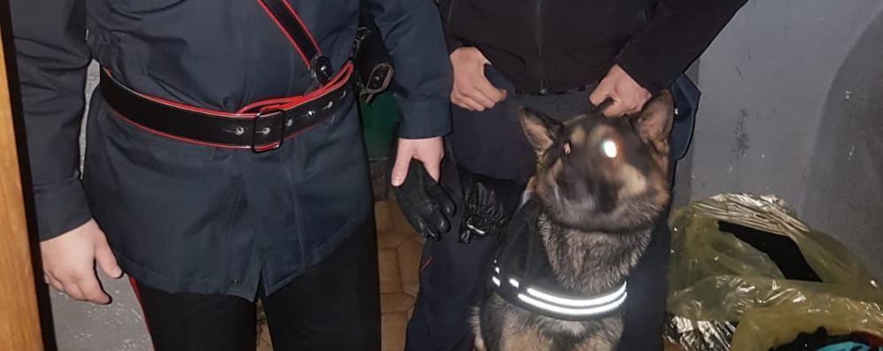 Palosco, maxi blitz anti droga -Video Carabinieri nel «fortino dello spaccio»