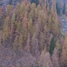 Il video con il drone della frana a Branzi