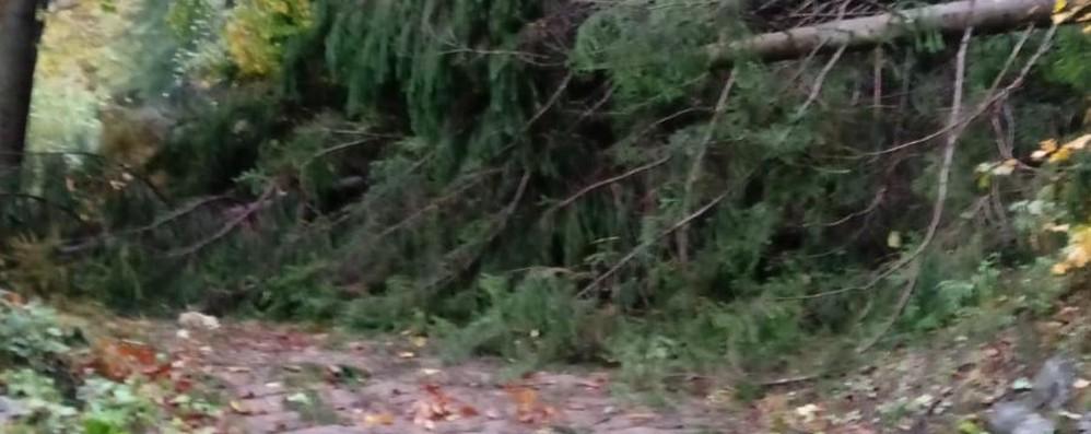 Sentieri distrutti nei nostri boschi L'appello del Cai: non avventuratevi