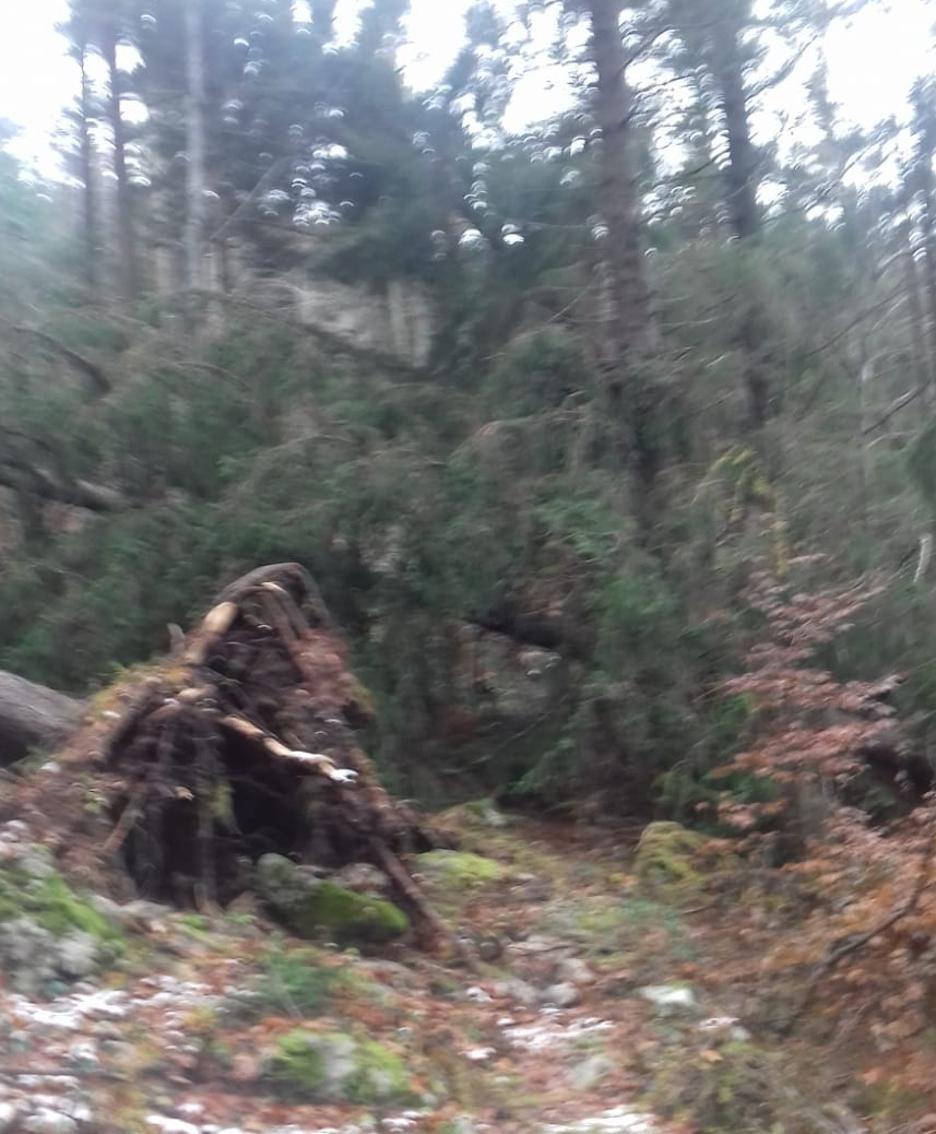 Risultati immagini per boschi distrutti dal vento