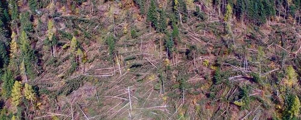 Con gli alberi caduti per il maltempo rischio speculazione sul prezzo del legno
