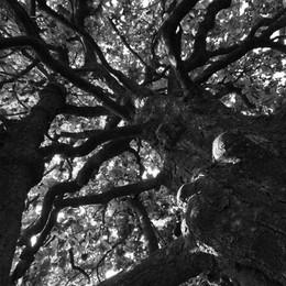 Magnolie, faggi, castagni, sequoie, cedri Ecco gli alberi più belli in Bergamasca