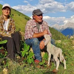 Studenti tra monti, mucche e pascoli  Il racconto della vita in alpeggio in un video