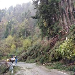 Tempesta di vento e alberi abbattuti «Un secolo per tornare come prima»