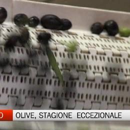 Scanzorosciate - Olive, stagione eccezionale