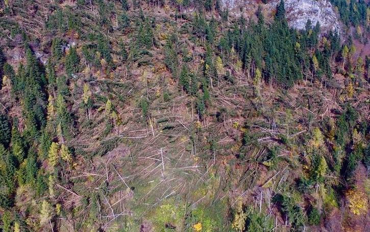 I boschi pagano il conto del maltempo Migliaia di alberi abbattuti nelle valli