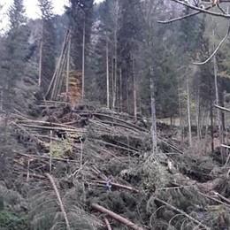 Maltempo, 20 milioni di danni a Bergamo Grave la situazione a Branzi - Il video