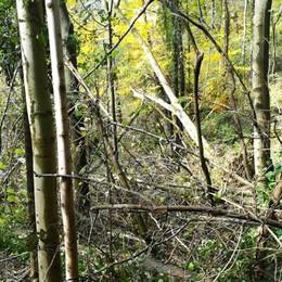 Pericolo per gli alberi sradicati Chiusa la provinciale per Aviatico