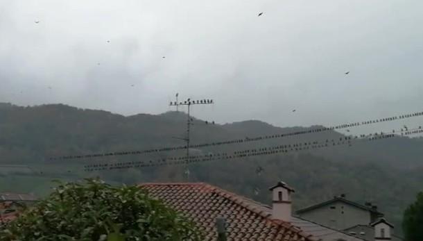 La meraviglia della migrazione degli uccelli (1)